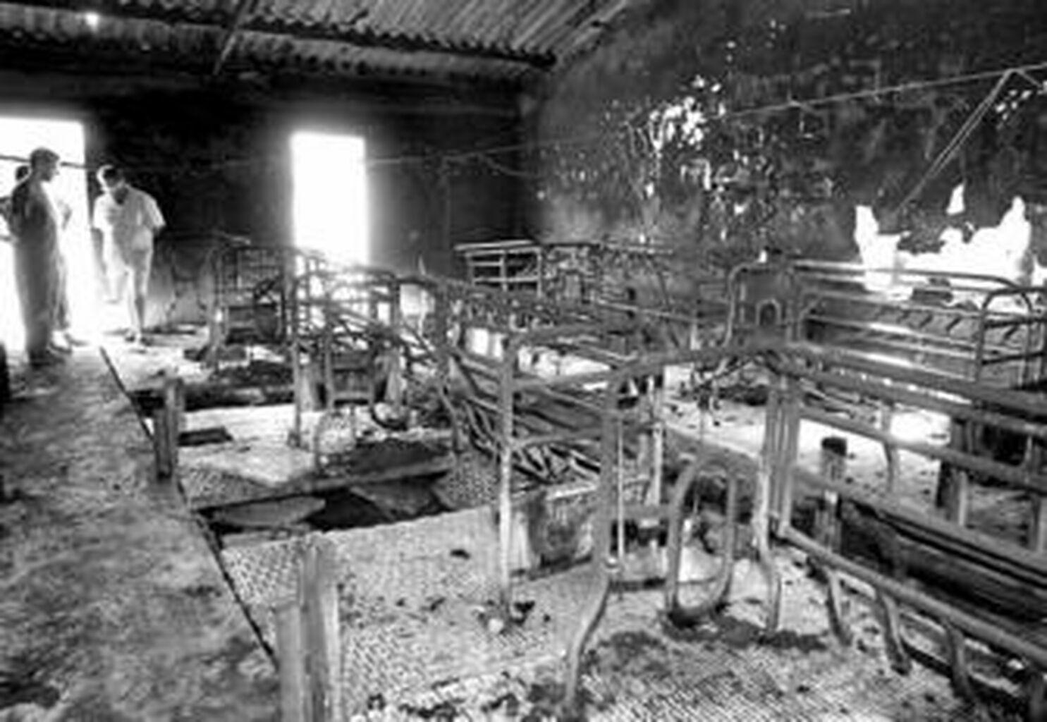 Un incendio en una granja de Chiclana acaba con más de un centenar de cerdos 1929fd482c4d7