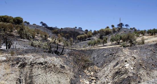 El incendio de Casarabonela ha calcinado 90 hectáreas, 70 de matorral y pinar y 20 de superficie agrícola  Foto: Sergio Camacho