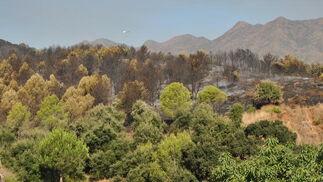 El incendio forestal, en imágenes