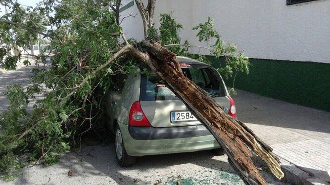 Un policía local de Jerez acompaña a una mujer que, tras caer una rama en su vehículo, resultó herida.