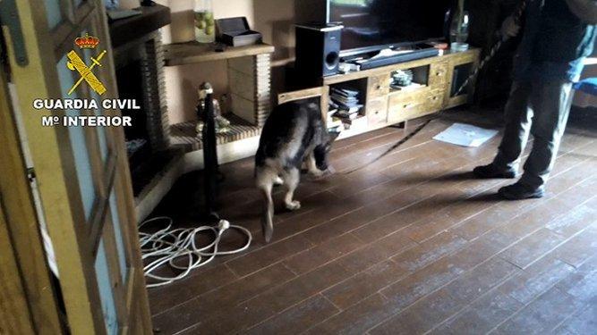 Un perro antidroga, en una de las viviendas registradas.