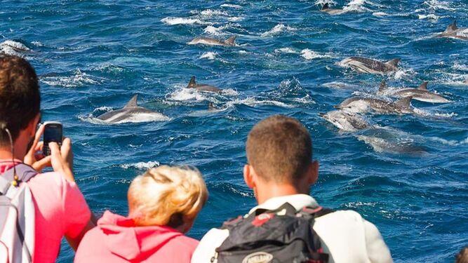 Avistamiento de cetáceos en el Estrecho.
