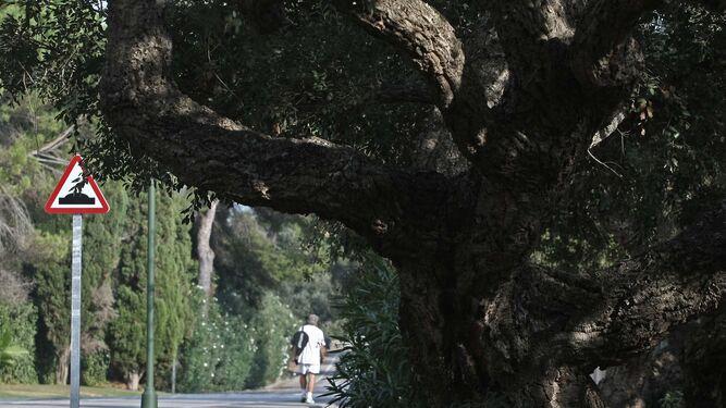 Una persona pasea por la finca Guadalquitón de San Roque, el pasado miércoles.