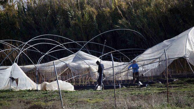 Daños en una plantación fresera de Huelva.