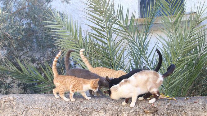 Resultado de imagen de gatos tesorillo
