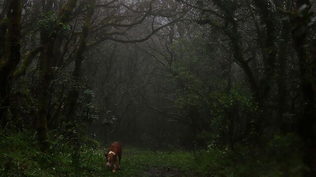 Fotos Campo De Gibraltar Un Dia En El Bosque De Niebla