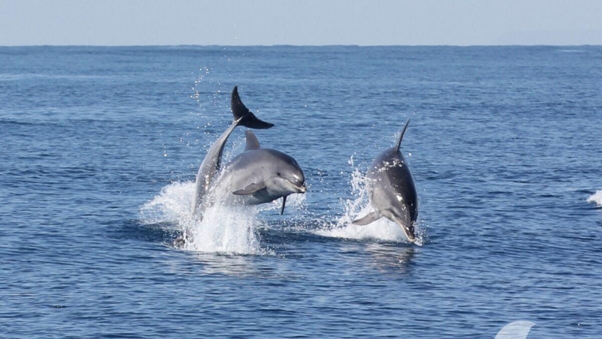 Se pueden ver delfines en el Estrecho de Gibraltar.