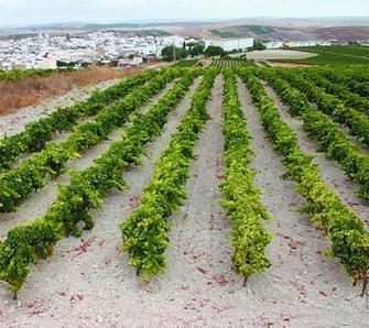 Una tierra de viñedos entre dos provincias